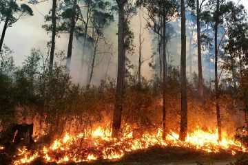 Does homeowner's insurance cover wildfires?